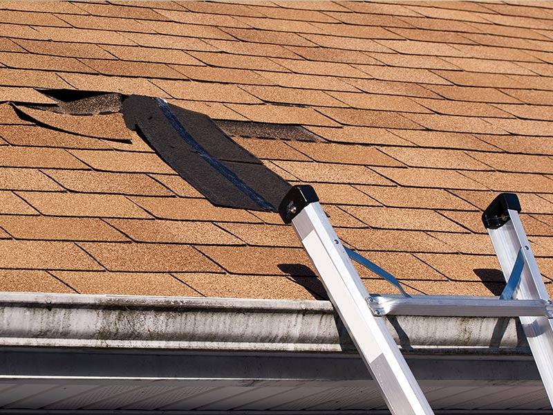• Roofing & Siding Wind Damage