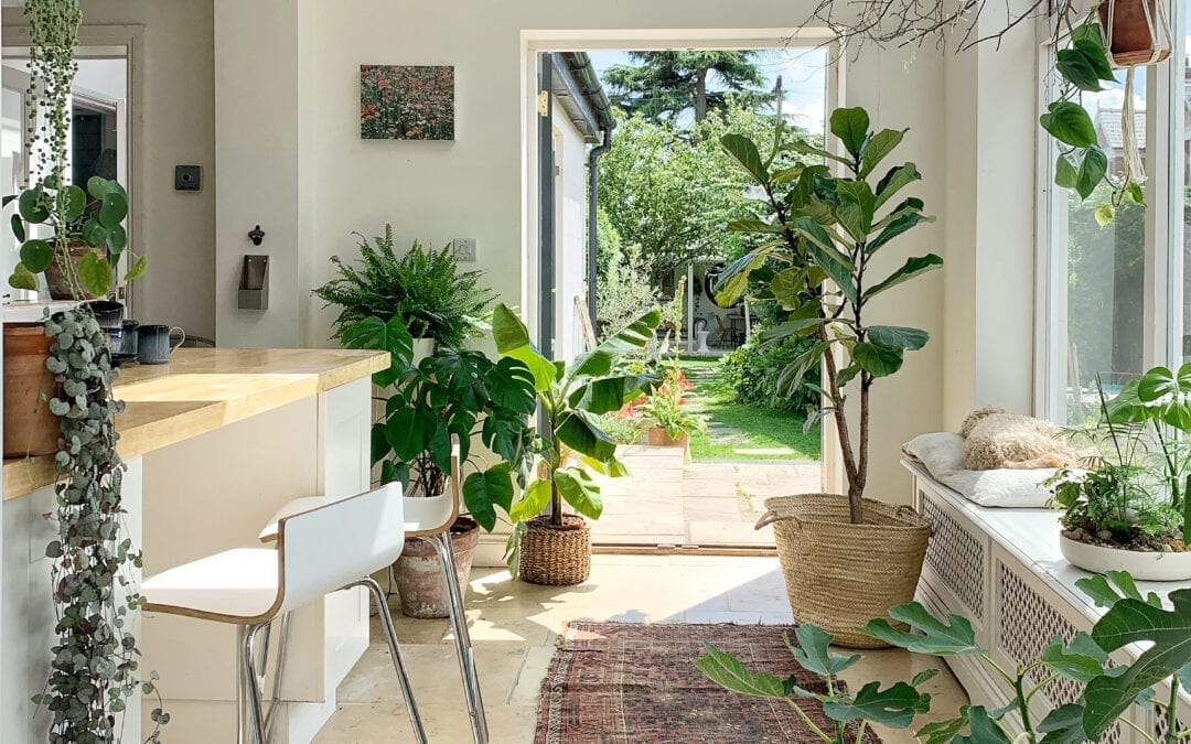 How to properly add plants both inside and outside your home